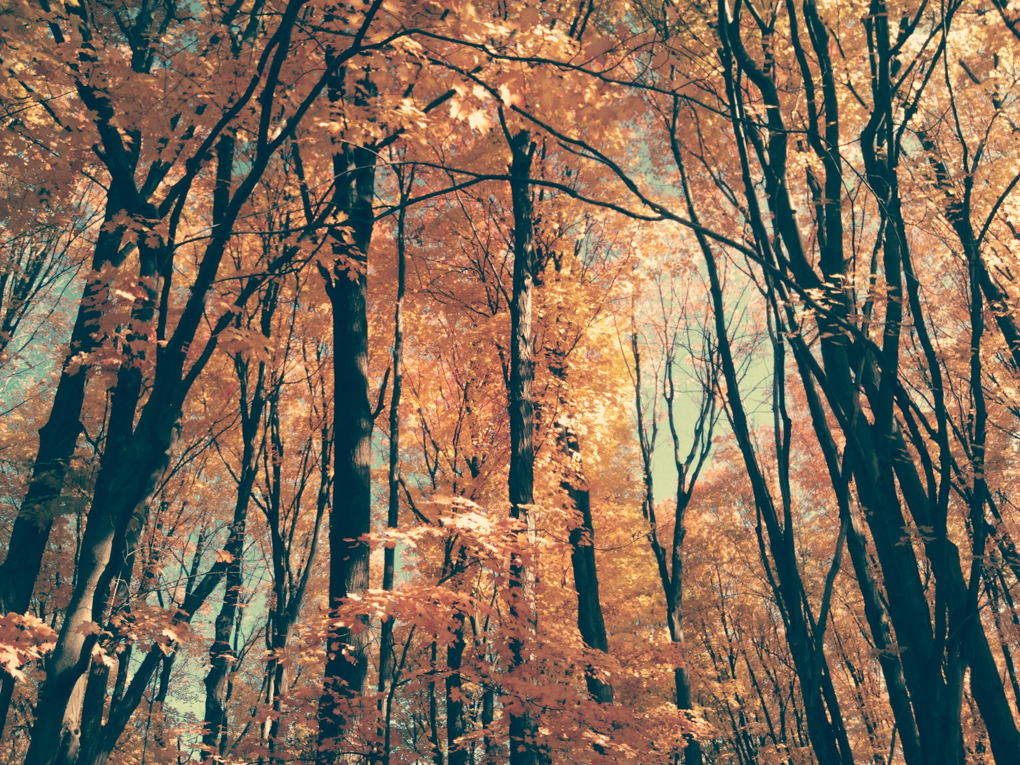 Autumn Trees at the E L  Johnson Nature Center