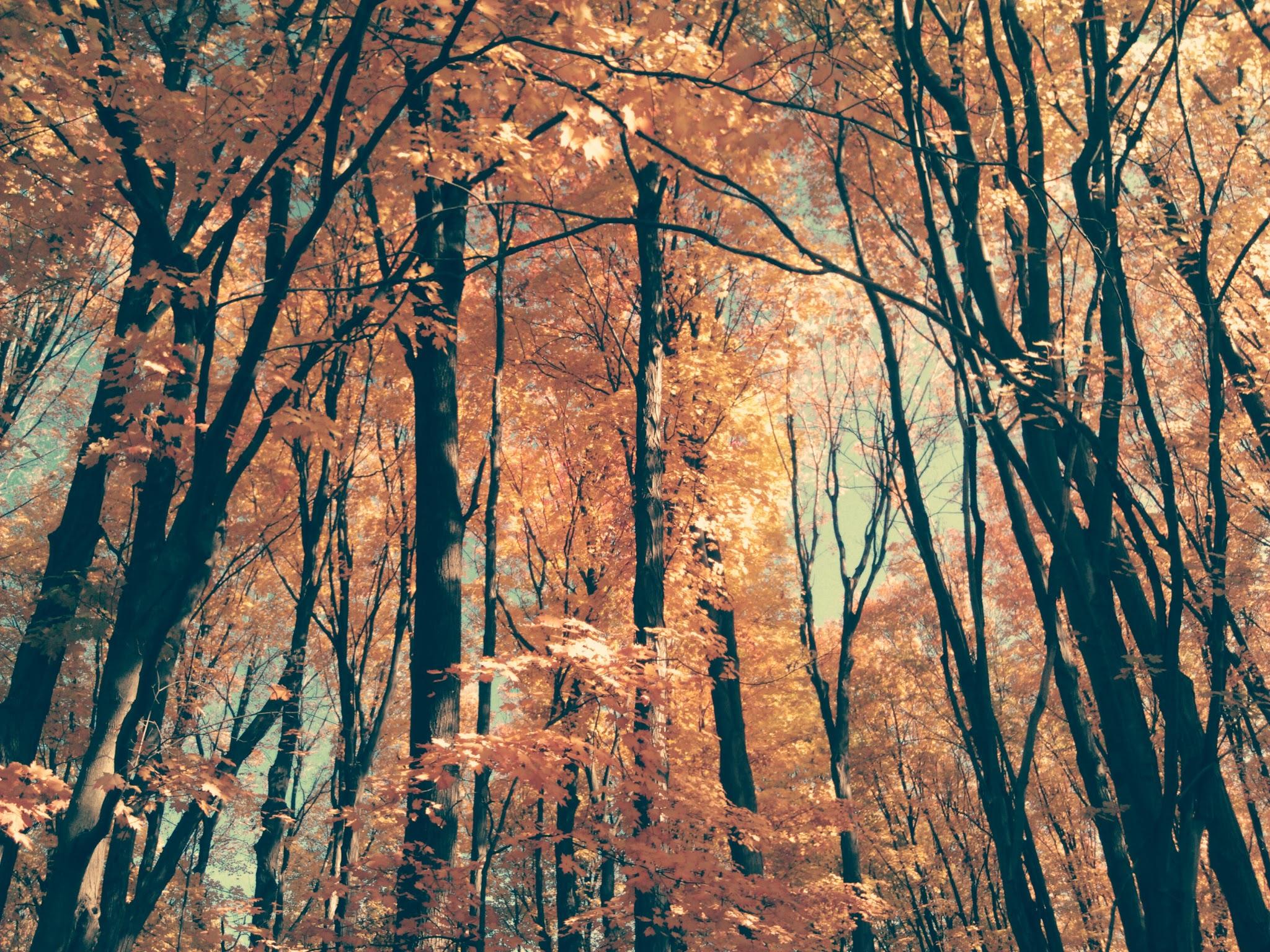 Autumn Trees at the E L  Johnson Nature Center
